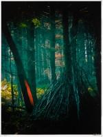 Woodland 001