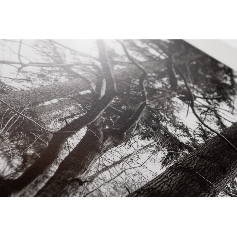 Woodland 002